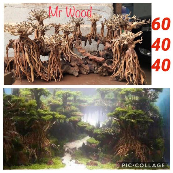 Layout Lũa Rừng Bay cho hồ Thủy Sinh- Xưởng Lũa Mr Wood
