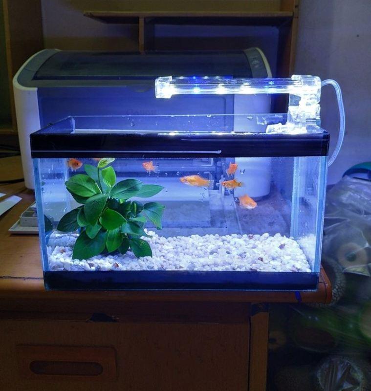 Bể cá mini 24 cm với 4 món (bể, sỏi nền, đèn led D10, cây ráy thủy sinh)