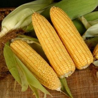 Hạt Giống Bắp Ngọt Năng Suất Cao, Thơm Ngon 5gr thumbnail