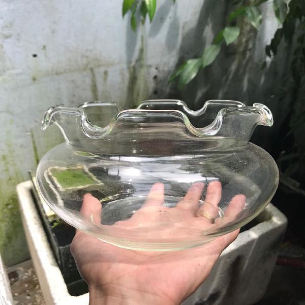 Bể cá mini - chậu cá để bàn -B17 bể cá tròn