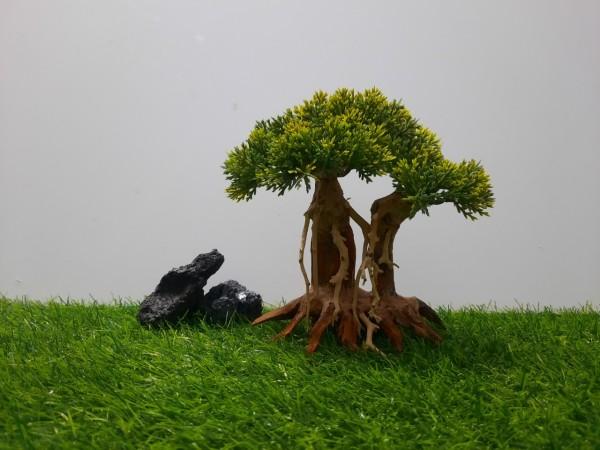 Lũa bonsai Mẫu tử ( C:19cm-N:18cm-S:10cm )