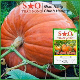 Hạt giống bí ngô Sao Thần Nông cao sản nhanh thu hoạch trái to nhiều quả ăn ngon thumbnail