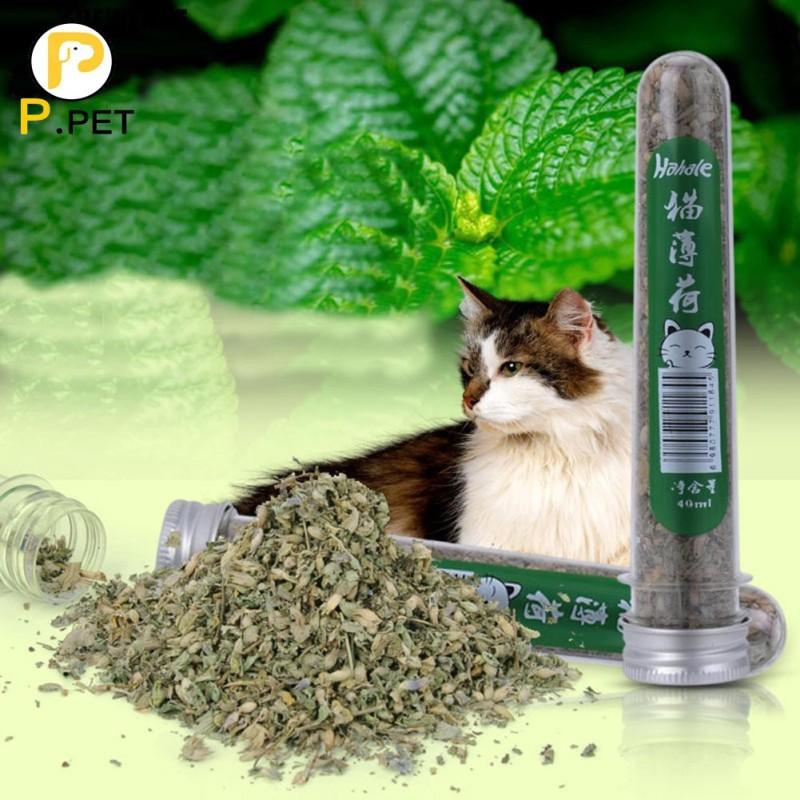 HCM- Cỏ mèo (tuyp 40ml) Đồ chơi cho mèo ngửi và gặm hạn chế búi lông tắc ruột trên mèo  tên khác- catnip mèo - bạc hà mèo gói hạt giống / tuyp cỏ mèo khô / hộp cỏ ---Phân loại