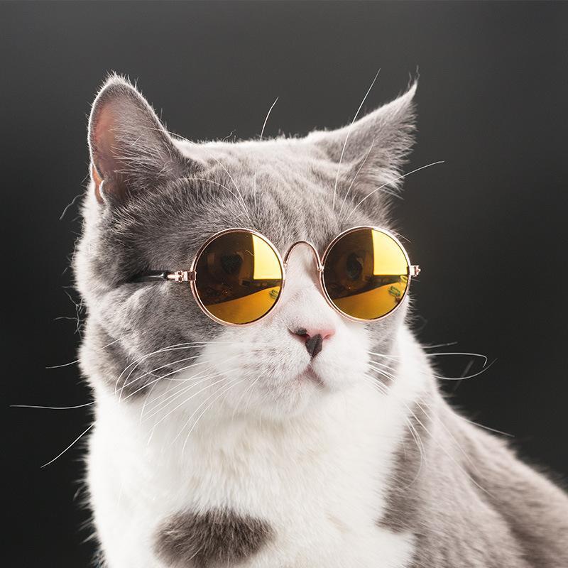 Kính mắt thời trang cho chó mèo