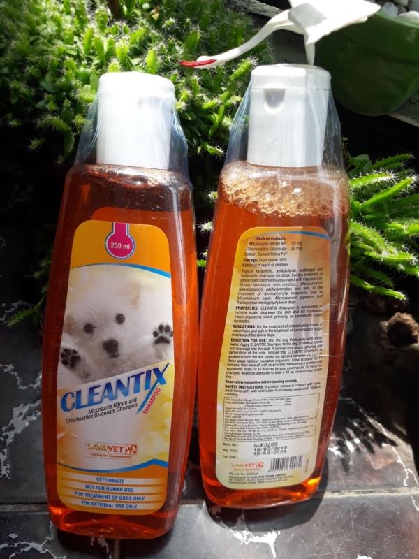 Sữa tắm Cleantix ngăn viêm da và nhiễm trùng do vi khuẩn trên chó