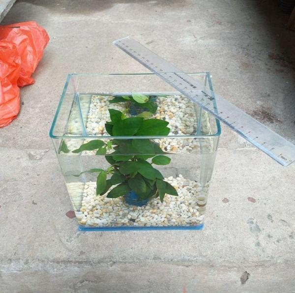 Bể cá mini đúc uốn góc cỡ 18 x 13 x15 cm