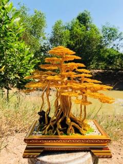 Cây bonsai wire thumbnail