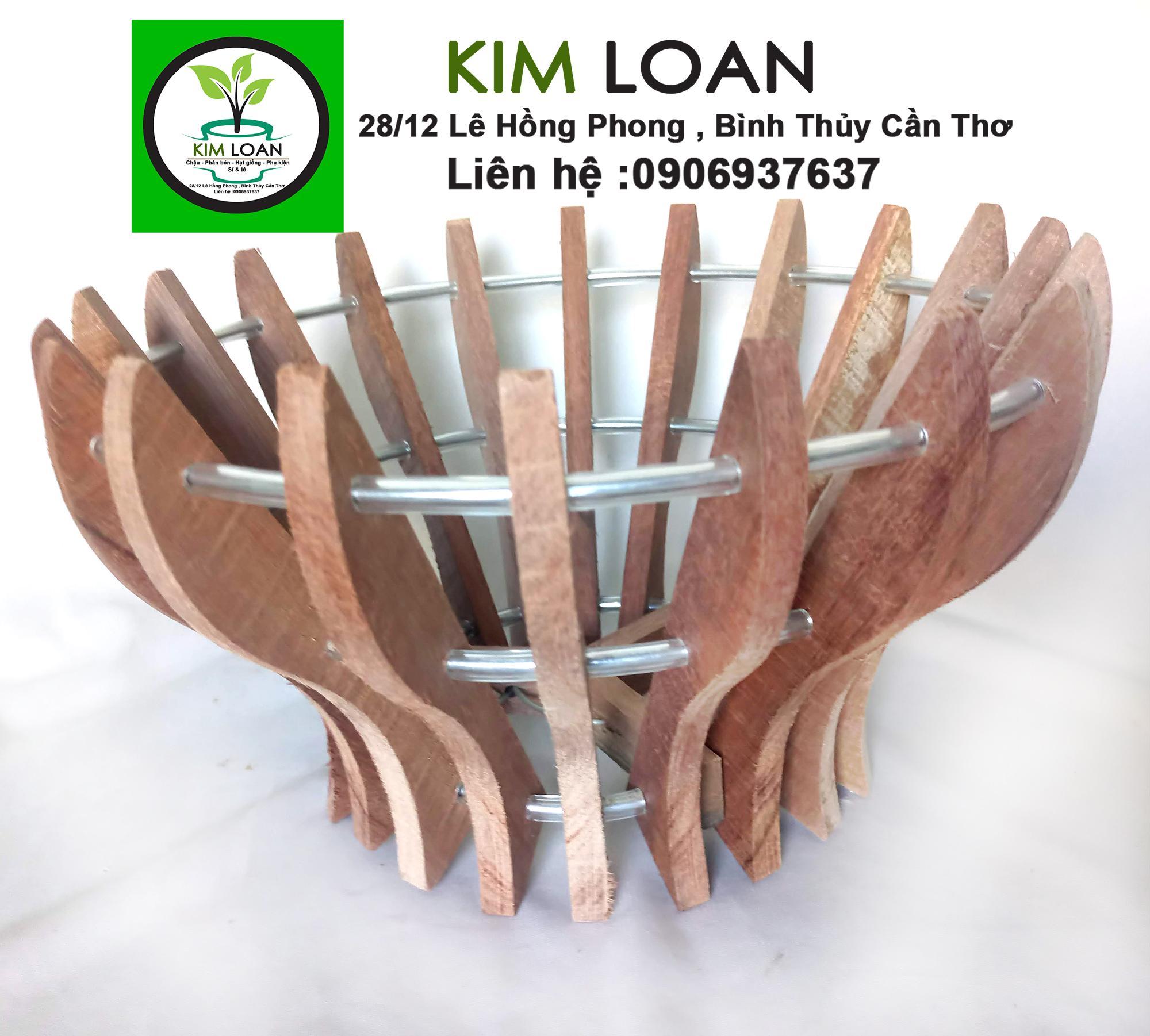 Combo 5 chậu lan gỗ hình cốc 21x15cm