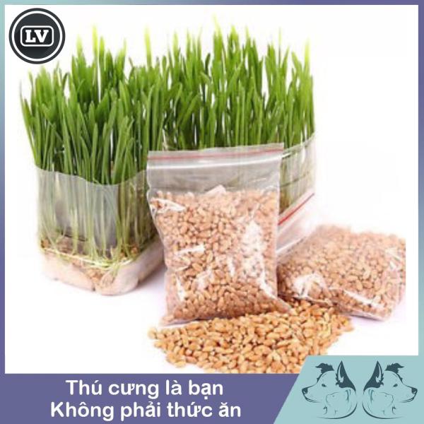 Hạt giống cỏ mèo bổ xung chất xơ và đẩy búi lông ra ngoài 10g - Phụ kiện Long Vũ