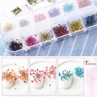 hoa khô trang trí móng tay đắpgel ẩn cho móng 12 màu tốt nhất