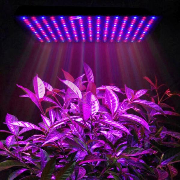 Big House 225 Đèn LED Bóng Đèn Grow Mỏng Cho Cây Trồng Trong Nhà Veg Cây Mọng Nước Hoa