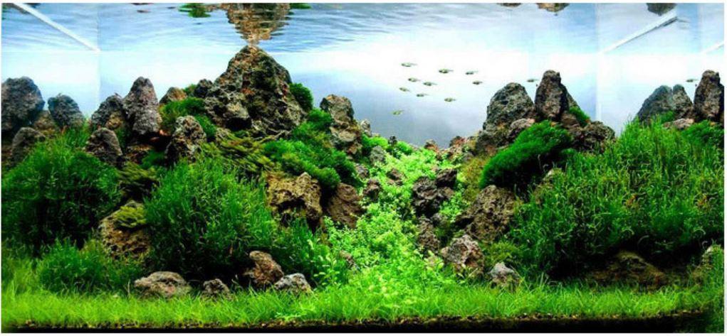 Hạt giống thủy sinh Ngưu ma chiên lùn ( phủ kín bể 30x30 cm)