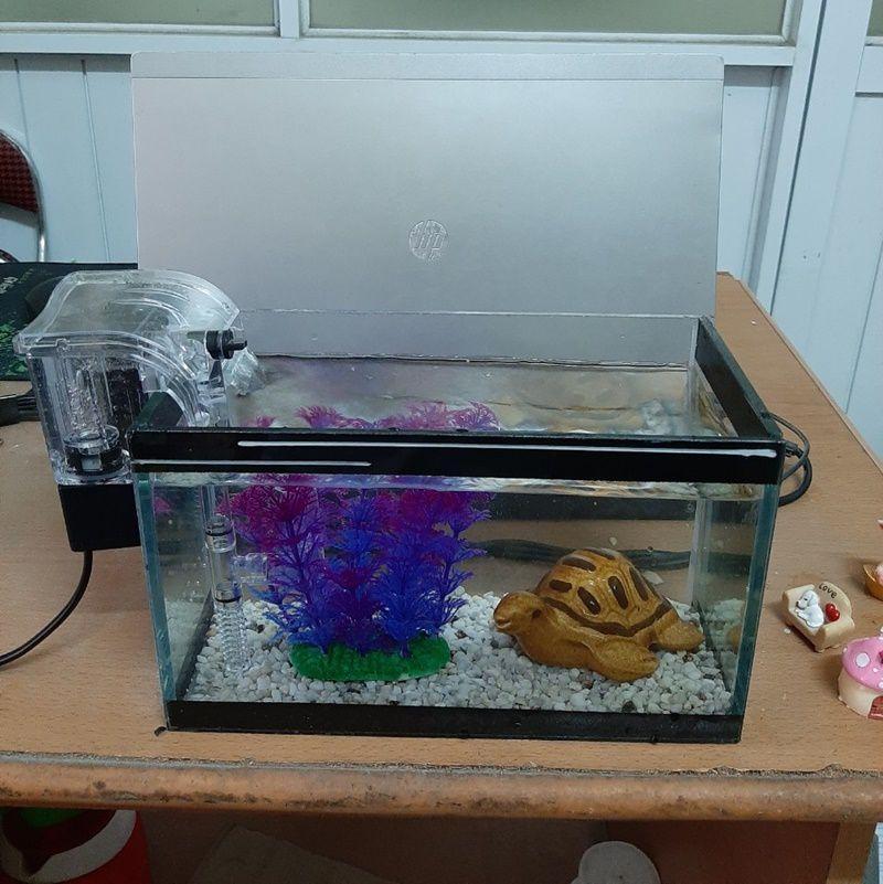 Bể cá mini 24 cm với 5 món (bể, sỏi nền, cây...
