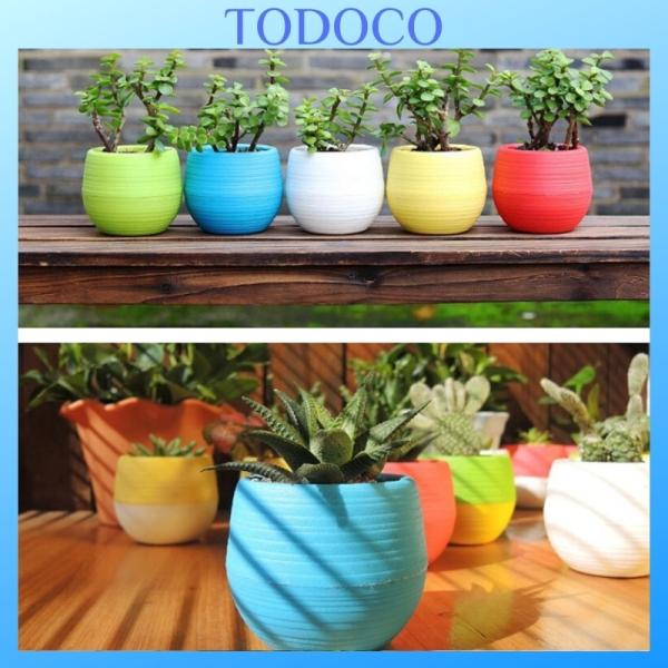 Chậu trồng Sen Đá mini giá rẻ đẹp - Chậu trồng cây Sen Đá - 6 màu TODOCO