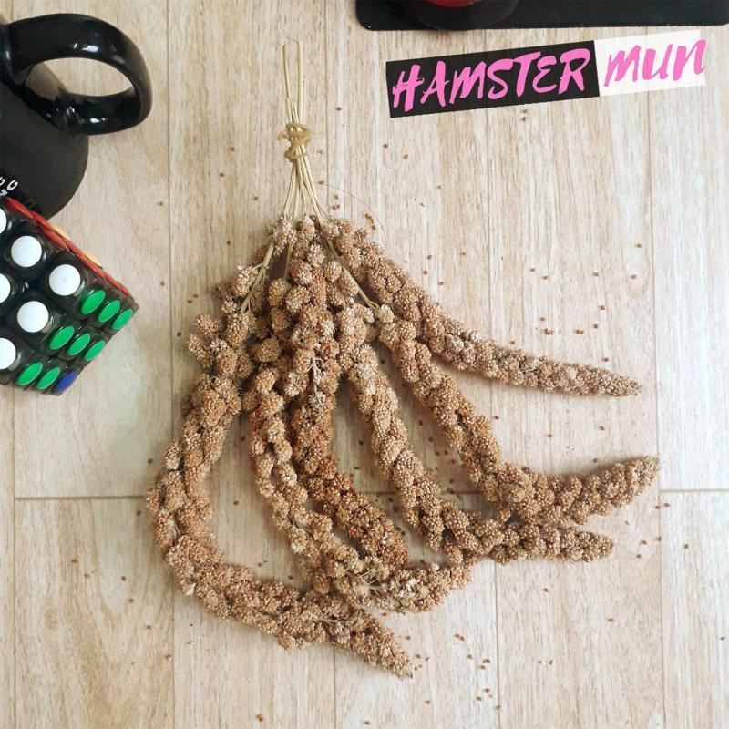 Kê sợi dành cho hamster đuôi mập sóc chim