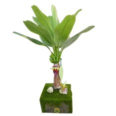 Cây chuối Hoa 44 MINI2080 (Xanh lá)