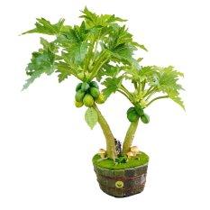 Cây đu đủ 2 thân Hoa 44 MINI 1081.M2 (Xanh lá)