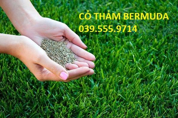 Hạt Giống Cỏ Thảm Sân Vườn BERMURA 1kg