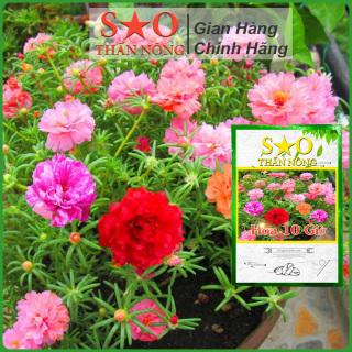 Hạt giống Hoa 10 giờ thái nhiều loại màu -500 hạt -2g - Hoa mười giờ Sao Thần Nông 1