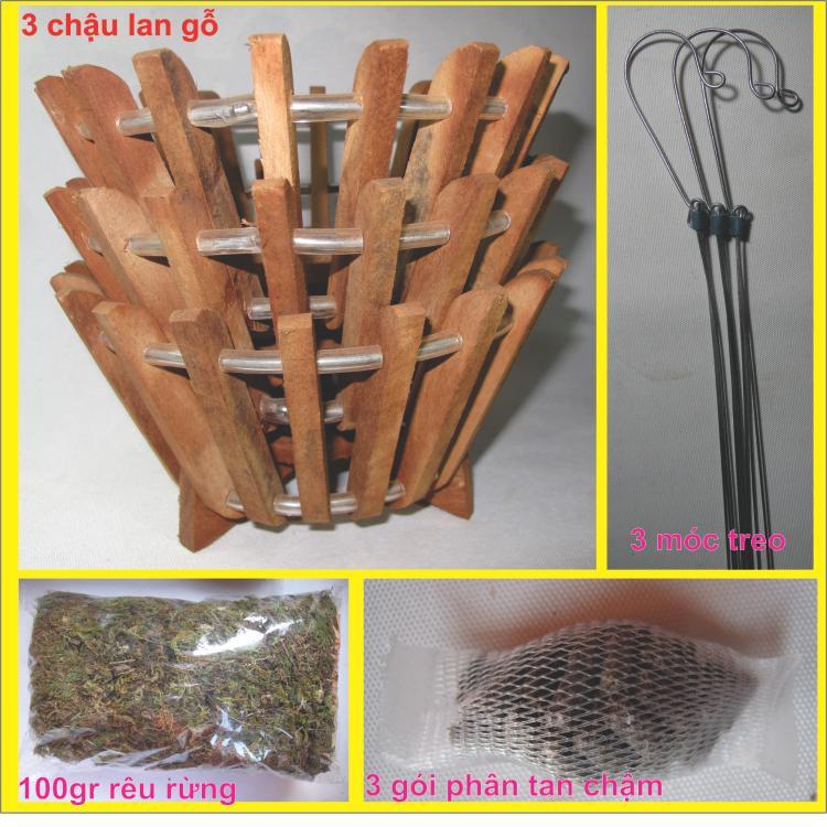 COMBO 3 CHẬU LAN GỖ (Số 1) + 3 dây treo + 3 túi phân tan chậm + 100gr rêu rừng