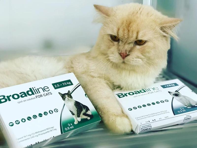 BROADLINE SPOT ON FOR CAT 2.5 - 7.5KG