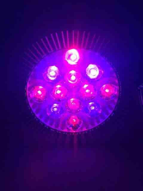 Bóng đèn led quang phổ trồng cây bóng led chìm