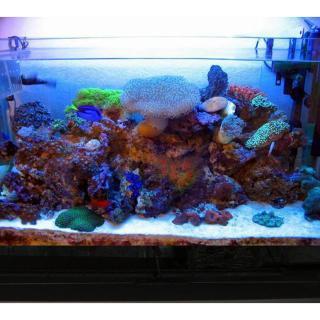 Cát Thạch Anh vật liệu lọc, trang trí bể cá, hồ thủy sinh (túi 200gr) 7