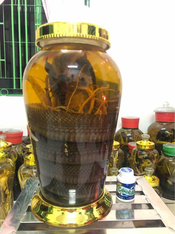 Bình 12lit - Rắn 4.5kg ngâm rượu đẳng sâm tốt nhất