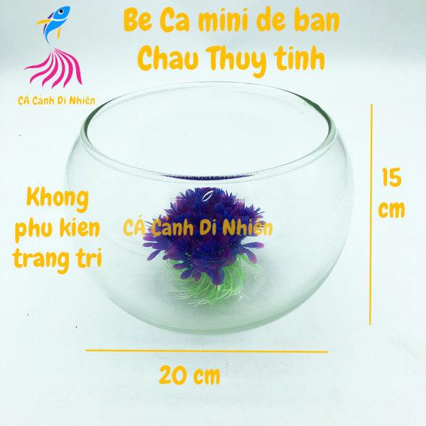 Chậu thủy tinh, bể cá mini để bàn TRÒN size 20 x 15 cm HT02