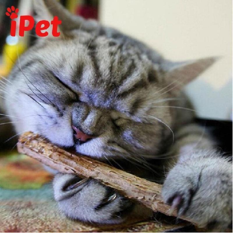 2 Cây Gỗ Catnip Bạc Hà Cho Mèo Gặm Trắng Răng - iPet Shop