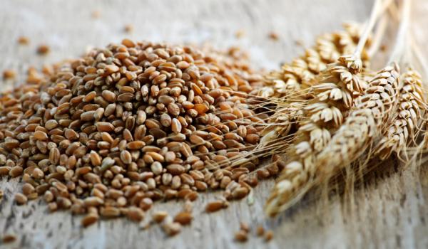Malt BBM Wheat Malt ( lúa mạch)