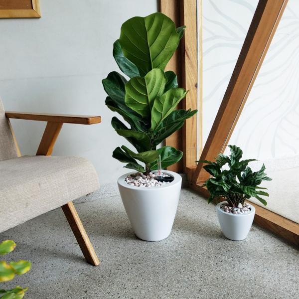 Chậu trồng cây tự dưỡng tròn bầu 26x26x24cm