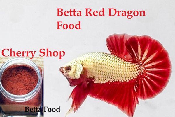 Thức ăn - Phụ kiện - Betta Dred Dragon plakat Siêu đẹp - Betta Thái Lan - Cherry Shop