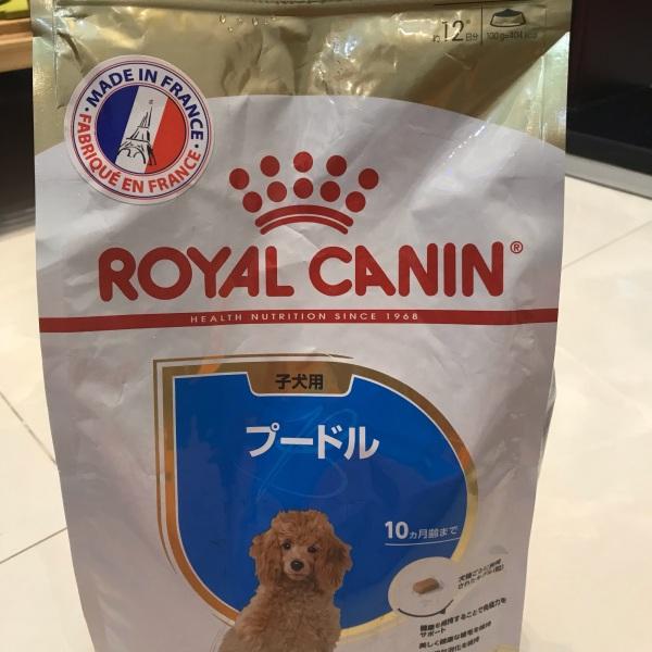 Royal CANIN poodle dưới 8 tháng tuổi