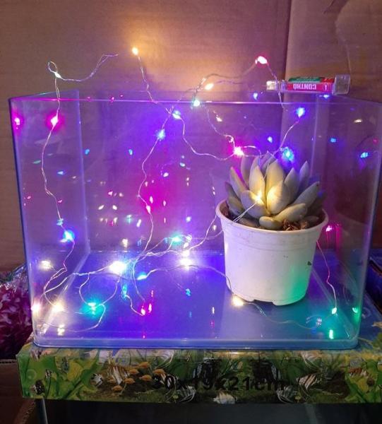Đèn led dây trang trí 4 màu không nháy 3m với 30 bóng - không có sẵn pin. Chuỗi đèn đem đến cho bạn hiệu ứng ánh sáng lãng mạn