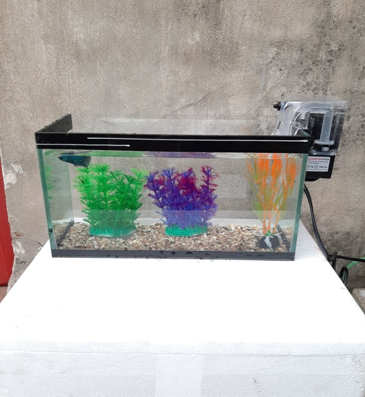 Bể cá, hồ cá cỡ 33 cm và 7 món (bể, sỏi nền, máy lọc, cây nhựa mini, 2 cây nhựa cỡ vừa, men vi sinh làm trong nước)