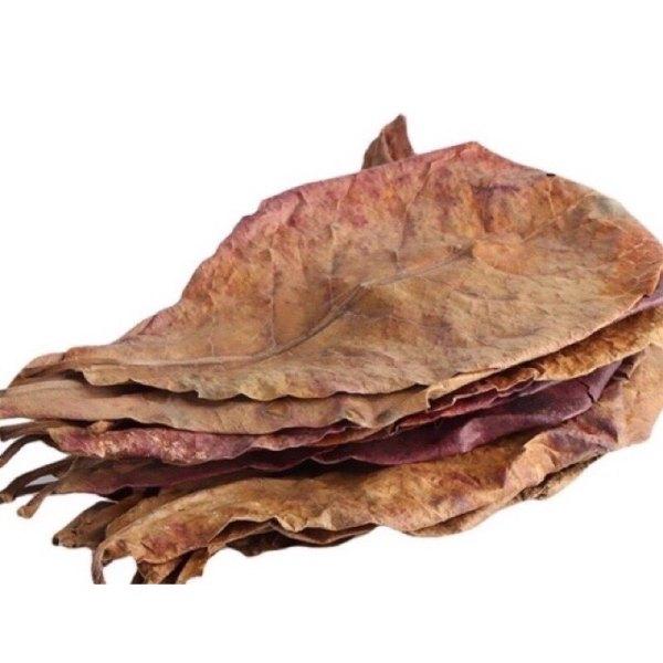 [LÁ BÀNG TỐT CHO CÁ] Combo 6 lá bàng khô 5.0.0.0 , lá bàng cho cá cảnh,Lá bàng giảm stress cá,lá bàng hạn chế bệnh ở cá