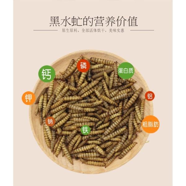 Wax worm ( sâu sữa /sáp ) sấy khô cho hamster/sóc/chim, cam kết sản phẩm đúng mô tả, chất lượng đảm bảo an toàn đến sức khỏe thú cưng của bạn