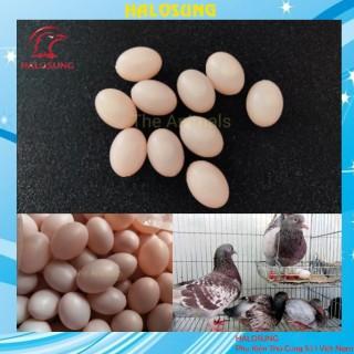 Trứng chim bồ câu giả - trứng nước hồng Phụ kiện lồng chim Halosung PK18 thumbnail
