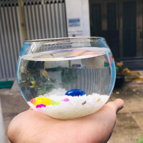 Chậu thủy tinh , bể cá mini 10cm