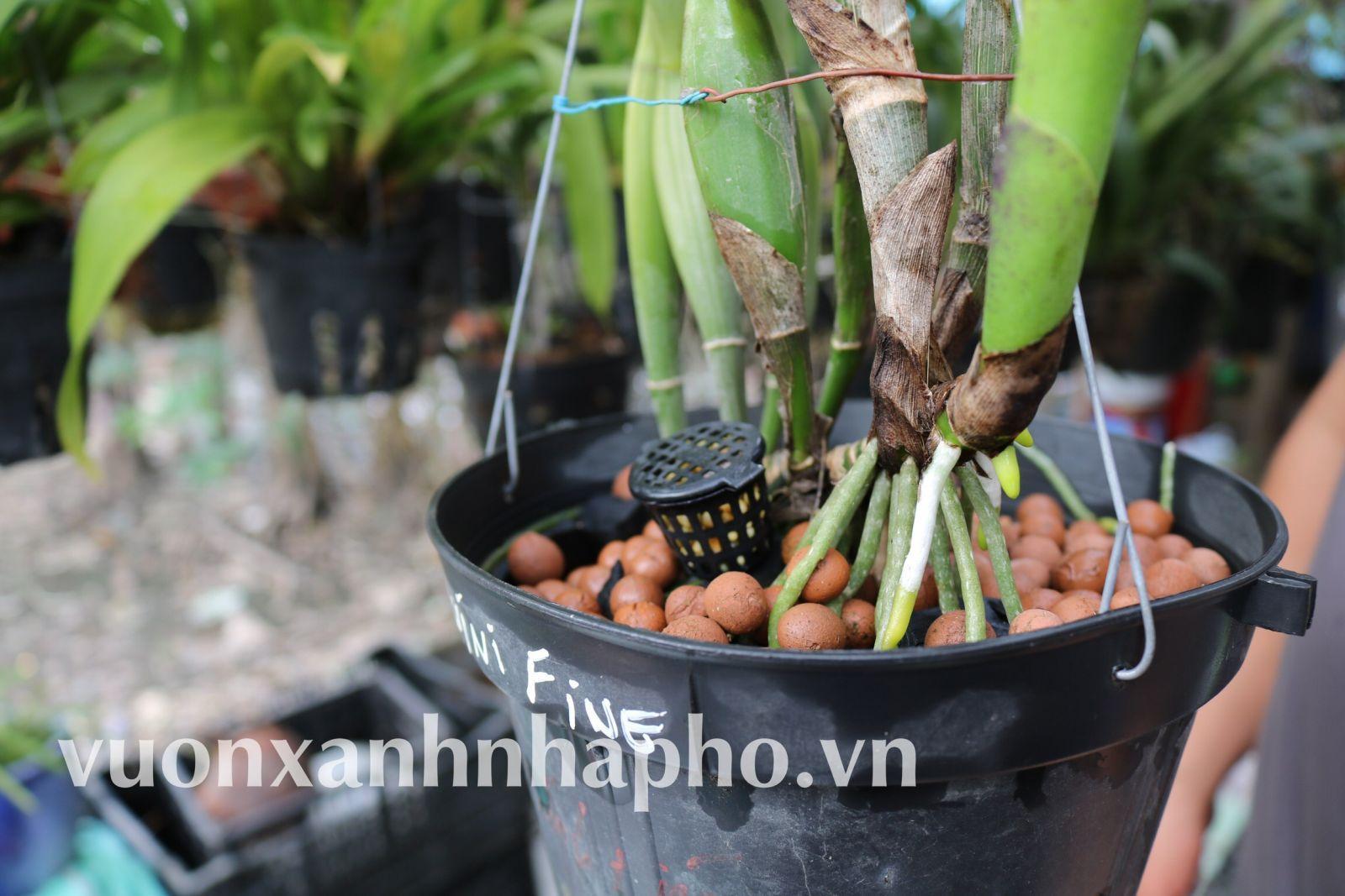 Đất Nung Thailand Size L 1 lít chuyên cho tiểu cảnh, xương rồng, sen đá, rau ăn lá, chậu sứ...
