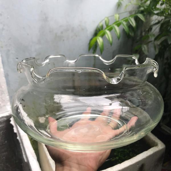 Bể cá mini - chậu cá để bàn - B18 bể cá tròn
