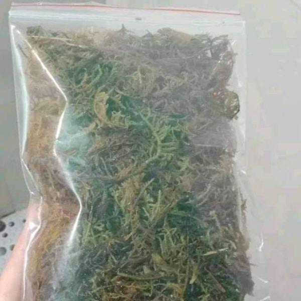 Rêu giữ ẩm