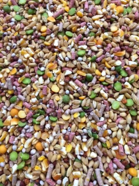 [HCM]Ngũ cốc gà đá dành cho gà tơ 1kg.