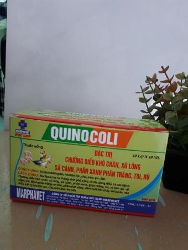 Đặc trị phân xanh, trắng QUINOCOLI cho gà 1 hộp 10 lọ