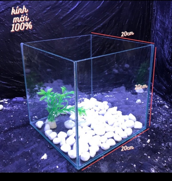 bể cá rubic 20x20x20