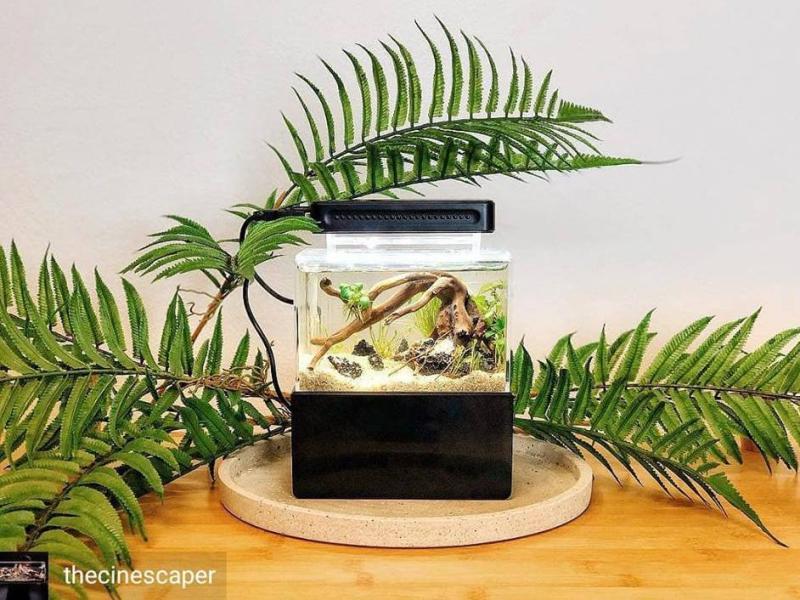 Bể cá thủy sinh Mini để bàn 01