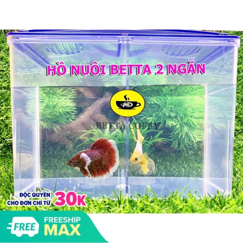 Bể Cá Mini Siêu tiện lợi - Hồ nuôi cá Betta - Cá Cảnh mini