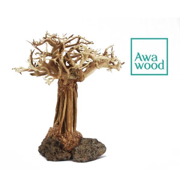 Lũa Bonsai Rừng Bay - Xưởng Awawood - 10 cm