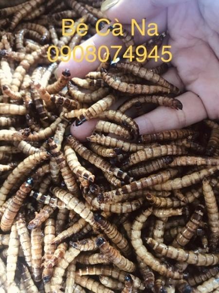 Sâu Rang Bơ Siêu Ghiền cho hámter ( 100 gram )